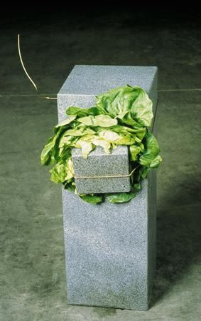 Untitled (Sculpture That Eats) - Giovanni Anselmo - Conceptual Art. 1968. One of Anselmo's best known works, it involves the crushing of a lettuce between a large standing block of granite and a smaller stone, secured by a wire. If the lettuce is allowed to dry out, the wire will lose tension and the stone will fall. Some have interpreted it as a symbol of the fatal destiny of man crushed between forces greater than him