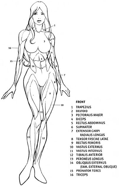 Today's Drawing Class 101: Female Anatomy |