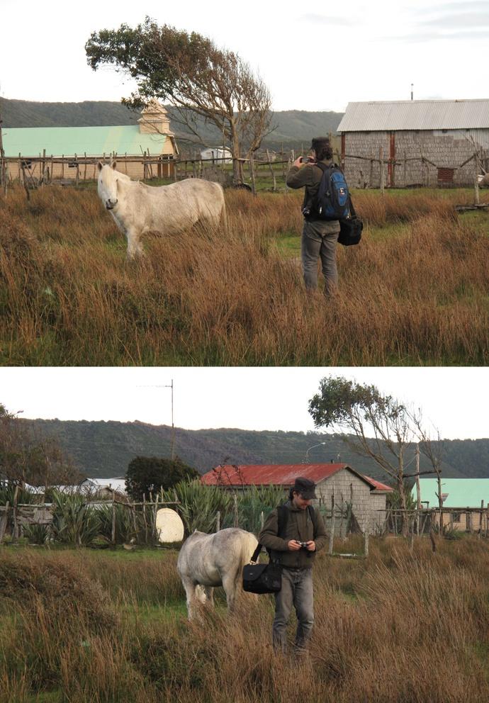 Fotografiando un caballo en los alrededores de Cucao. Fotografías de mi primo Diego, año 2009.