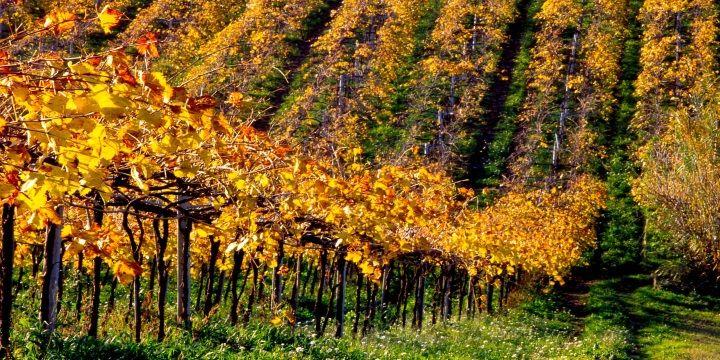 Vi har fått nöjet att ställa några frågor till Franco D'Eusanio som driver vingården Chiusa Grande i Italienska Abruzzo.