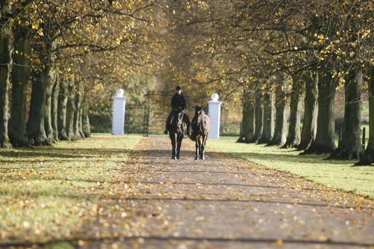 The entrance through the avenue of lime trees.
