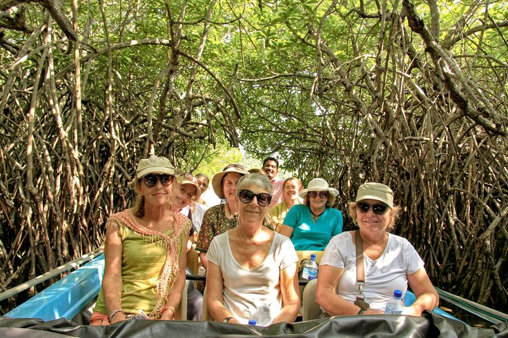 Mangrove tunnel, Sri Lanka