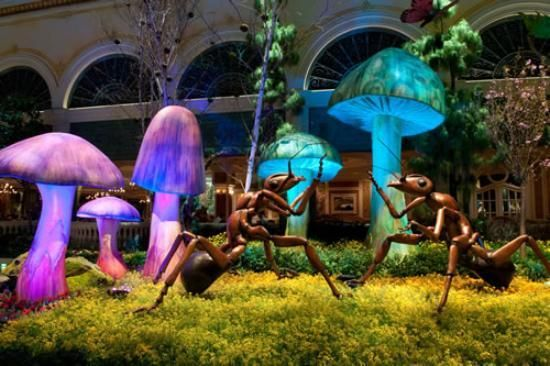 """Bellagio Conservatory and Botanical Gardens - Las Vegas ~ """"The hotel changes the display about 4 times a year, roughly to coincide with the seasons. It is a site not to be missed. A new added feature is music for one hour in the afternoon."""" Free"""