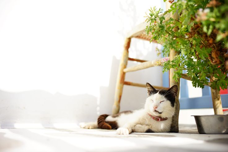 Cycladic Cat https://www.flickr.com/photos/sigmadp2j/19386093049/