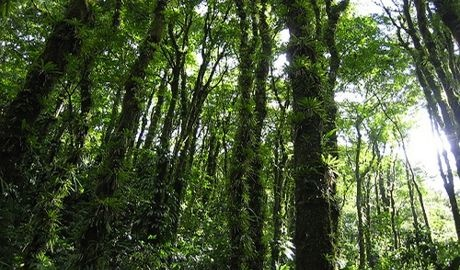 L'humanité exerce une pression de plus en plus forte sur les écosystèmes - BIODIVERSITÉ, ÉCOSYSTÈMES, RESSOURCES NATURELLES, WWF - http://www.zegreenweb.com/sinformer/lhumanite-exerce-une-pression-de-plus-en-plus-forte-sur-les-ecosystemes,54856