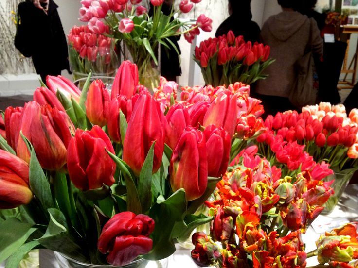 Strong love and Rococo - tulips