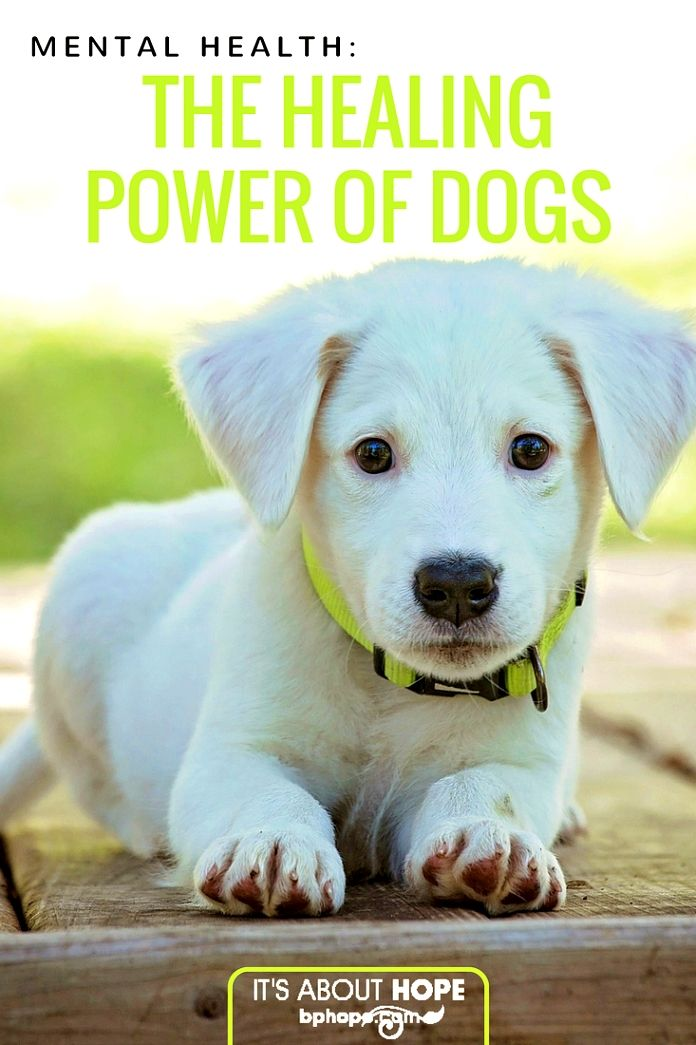 Dog Training Info As An Example A Loving And Calm Dog Probably