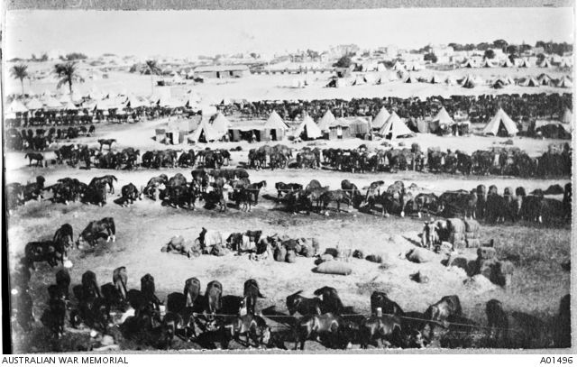 View of the 3rd Brigade tents and horse lines at Zahariah Camp.c 1915