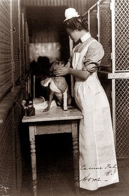 A woman bandaging a dog's leg in 1907. The picture was taken at the Bide-A-Wee home for animals in New York.