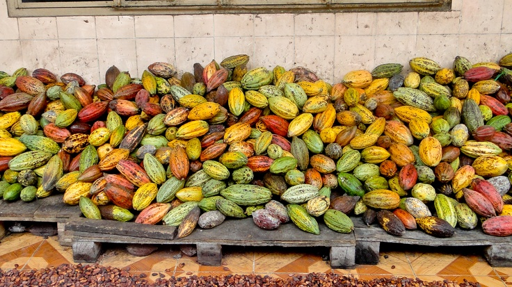 Kwatta uses UTZ Certified cacao pods and beans - produced in a durable & sustainable way. Check out  http://www.kwatta.be/nl/utz/ or http://www.kwatta.be/fr/utz/