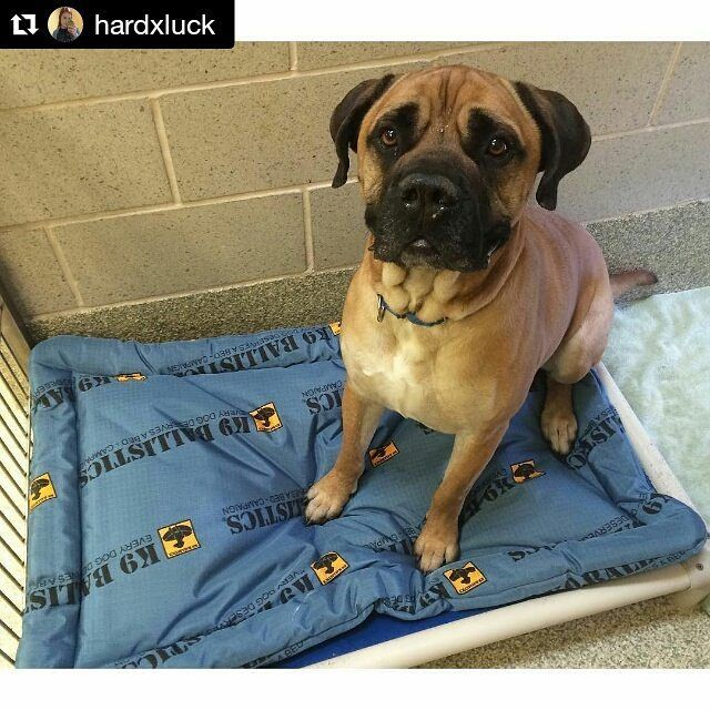 13 best every dog deserves a bed images on pinterest grandes camas adoptable rocky is another dog benefiting from the everydogdeservesabed campaign he gets to be comfortable while he waits remember you can nominate a solutioingenieria Image collections