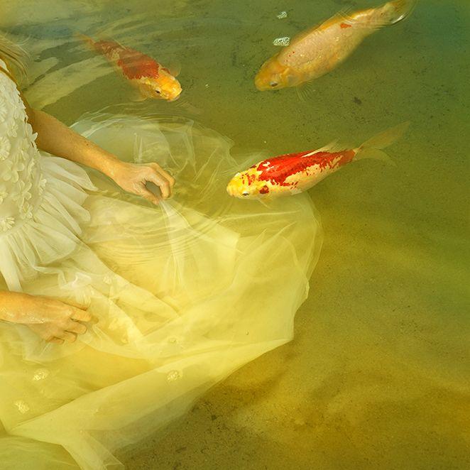 tom chambers photography | portfolio - animal visions / lorem ipsum