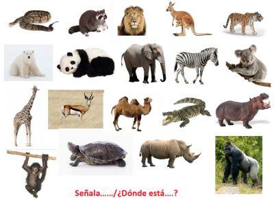 PRUEBA LÉXICO – SEMÁNTICA Los animales