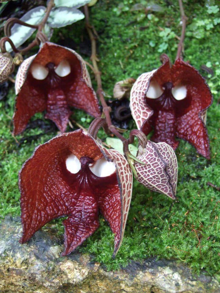 Fleurs aux formes insolites qui ressemblent à des animaux ou des humains