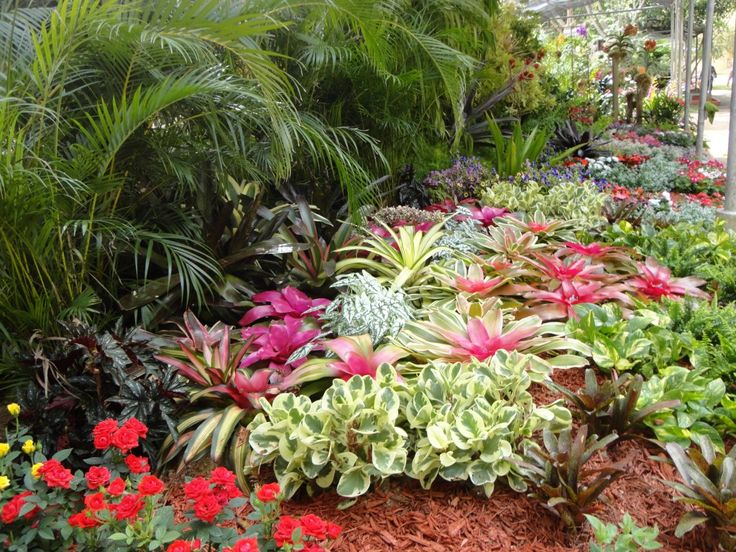 11 best images about jardines tropicales on pinterest for Plantas tropicales de exterior