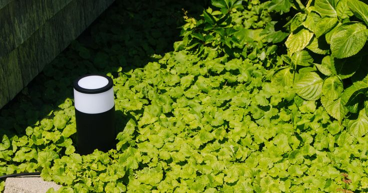 The best smart outdoor lighting for backyards, pathways and more