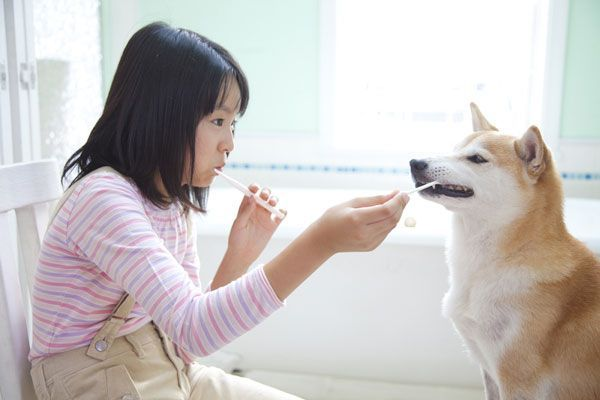 A Dog Dental Care Guide That Every Pet Parent Can Do How often should you really brush your dog's teeth or hit the vet's for a cleaning? We've got some real answers on dog dental care.
