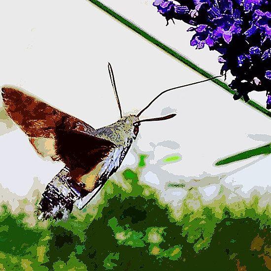 Papillons Sphinx  - Butterflies  PAINT  02 (c)(t)  Kodak z1285  by Olao-Olavia / Okaio Créations 2013