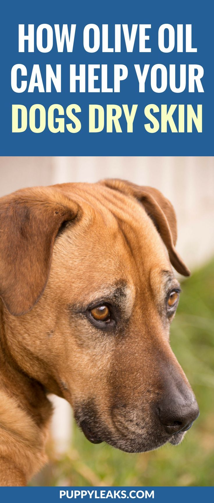 Benefits Of Adding Olive Oil To Dog Food