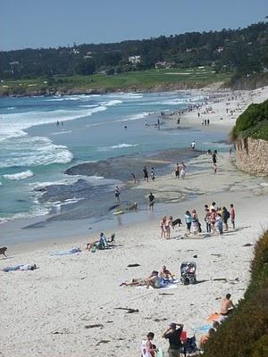 Carmel Beach...The funnest pet friendly beach there is!!!