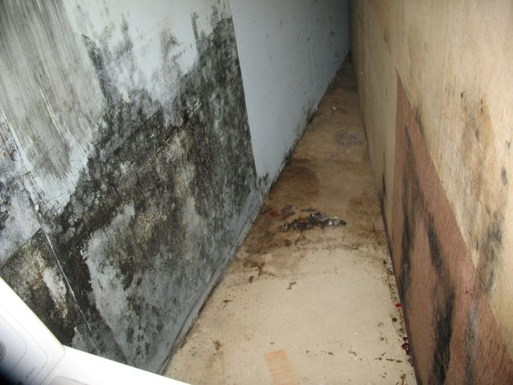 10 Best Basement Waterproofing Warning Signs Images On