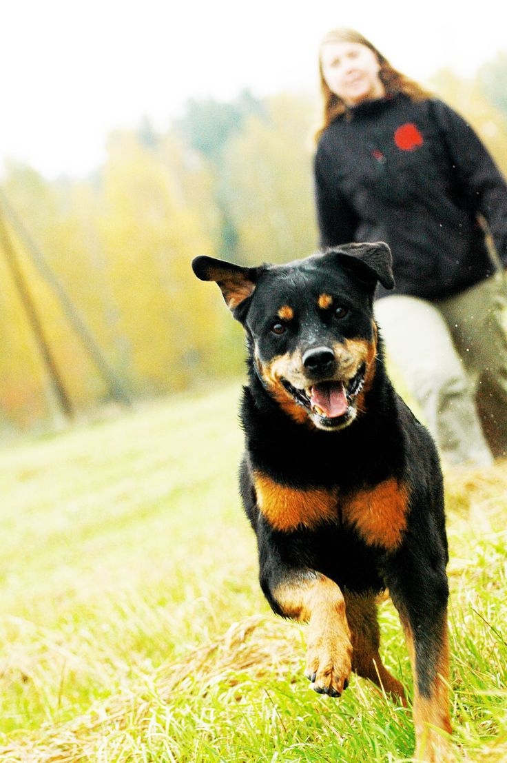 The rottweiler Nana suffered from long-term arthritis with a lot of pain that quickly got bad. Thanks to Nutrolin Joint Duo Nana could live a long and speedy life without painkillers.
