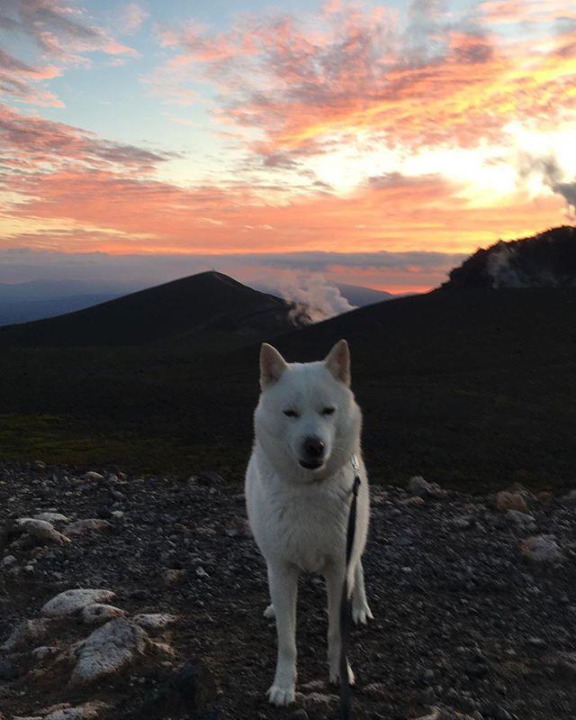 明日から台風の影響でお天気は火曜日まで⤵︎⤵︎⤵︎ 夕方、夕陽を見にお山へ〜(^ェ^)〜 また貸切りの頂上でした(^^) #北海道犬 #日本犬 #アイヌ犬 #犬 #白犬 #わんこ #愛犬 #笑顔 #犬バカ部 #和犬 #天然記念物 #犬散歩 #涼しい #初秋 #アウトドア #保護犬シェルター #殺処分ゼロ #お散歩好き #hokkaidoken #hokkaidoinu #Japaneseken #Japanesedog #ainuken #ainudog #Whiteinu #Likes #outdoor