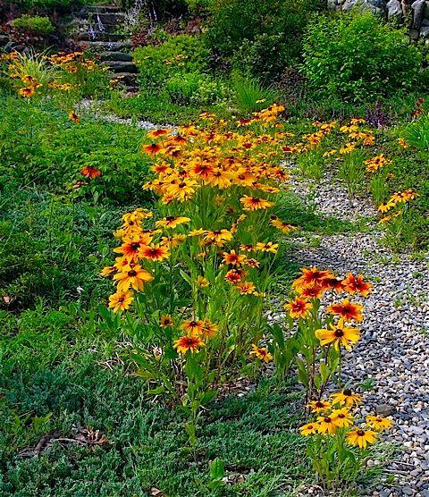 31 best images about Woodland Garden Ideas on Pinterest