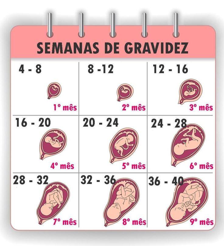 Tudo Sobre As Semanas De Gesta 231 227 O Beb 233 Gravidez 7