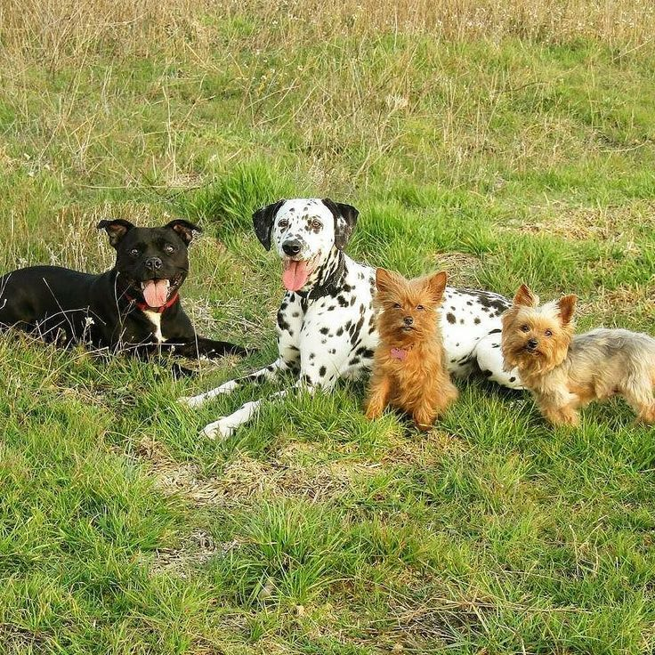 Quando tu e il tuo migliore amico vi fate una foto belli sorridenti ma puntualmente ci sono quelli che odiano le foto e sorridono imbarazzati  Foto di: @leticia.30  #cani #dog #cane #dalmata #dalmatians #dogs #yorkshireterrier #yorkshire #yorkiesofinstagram  #dalmatianspotlight #dogoftheday #petscorner #cane#dogsdaily #dogsgram #spottydog #natureaddict #instanaturefriends #dogstagram #keepcalmandlovedalmatians #dalsofinstagram #familydog #dalmatiansofinstagram #dogstagram #petscorner…