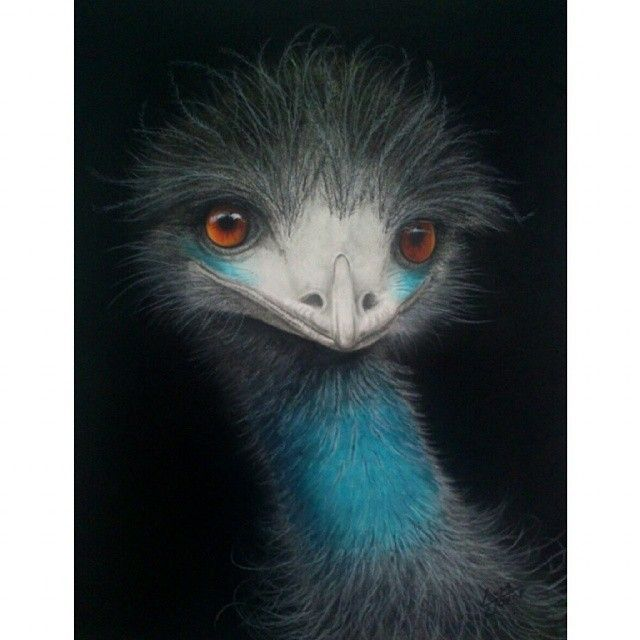 """Am l cute or what!"" Baby emu's big sister has finally made her debut. #girlpower #charcoaldrawing #emu #australianbirds #outback #australialovesyou #nawden #triplesartists #world_art_sharing #topworkofart #BESTDM #girlpower #daily__art #artoftheday #art_magazine #artloverslane #artistmafia #illustrateyourworld #illustration #artcollective #artists_community #fineart #modernart #instaart #wildlife"
