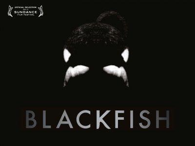 Blackfish, ou les coulisses d'une prison
