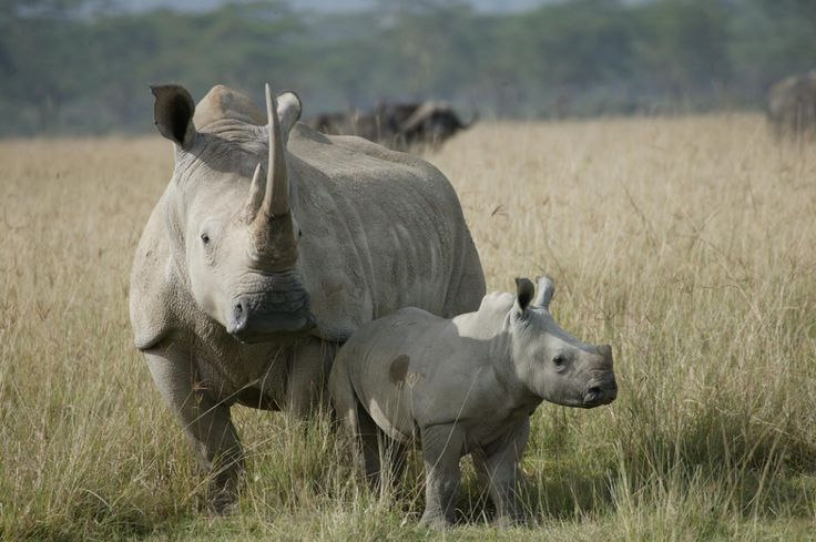Let's drink wine and save the rhino!