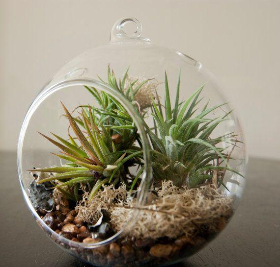 17 best images about plants on pinterest terrarium kits