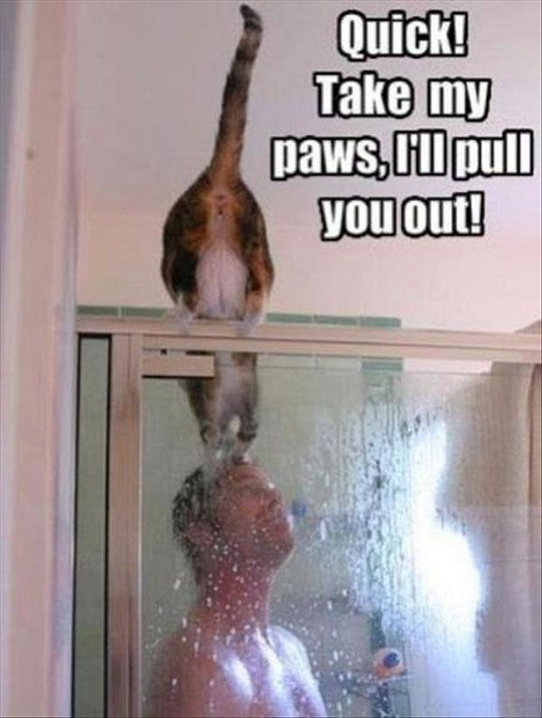 funny animal pictures with captionsTap the link to check out great cat products we have for your little feline friend!