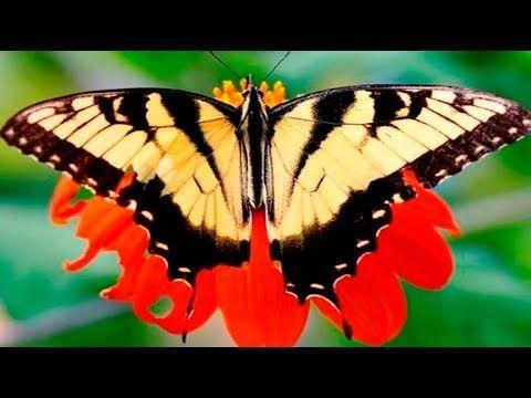 Самые Красивые и Удивительные Бабочки #2