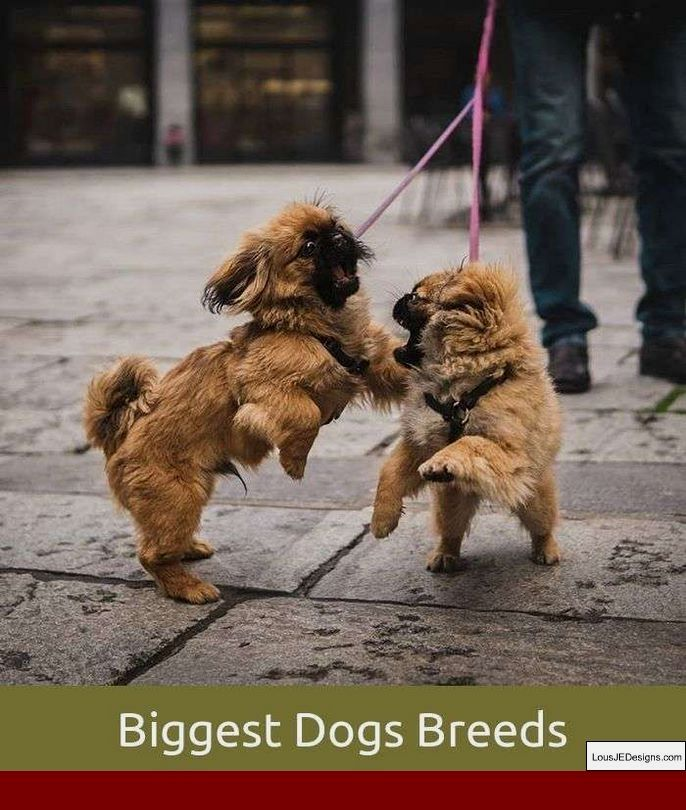 Dog Training Tips In Kannada And Pics Of How To Train Your Dog To