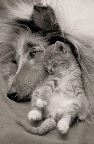tendresse entre un chien et un chaton...