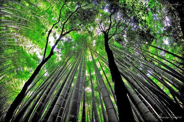 """""""Natura / 09:39"""", Bamboo Path"""