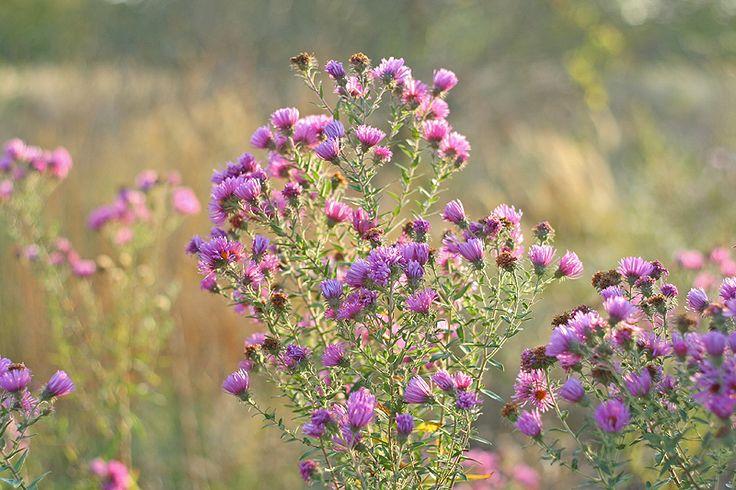 The Botanical Adventures of a Drunken Bee