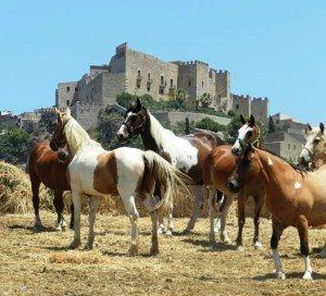 Italia: una lunga tradizione in Vendita e Allevamento di Cavalli