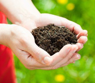 """How to Buy Compost - Some """"compost"""" sold at garden centers or other outlets is downright nasty for your garden. Know how to feel a bag out before you buy."""