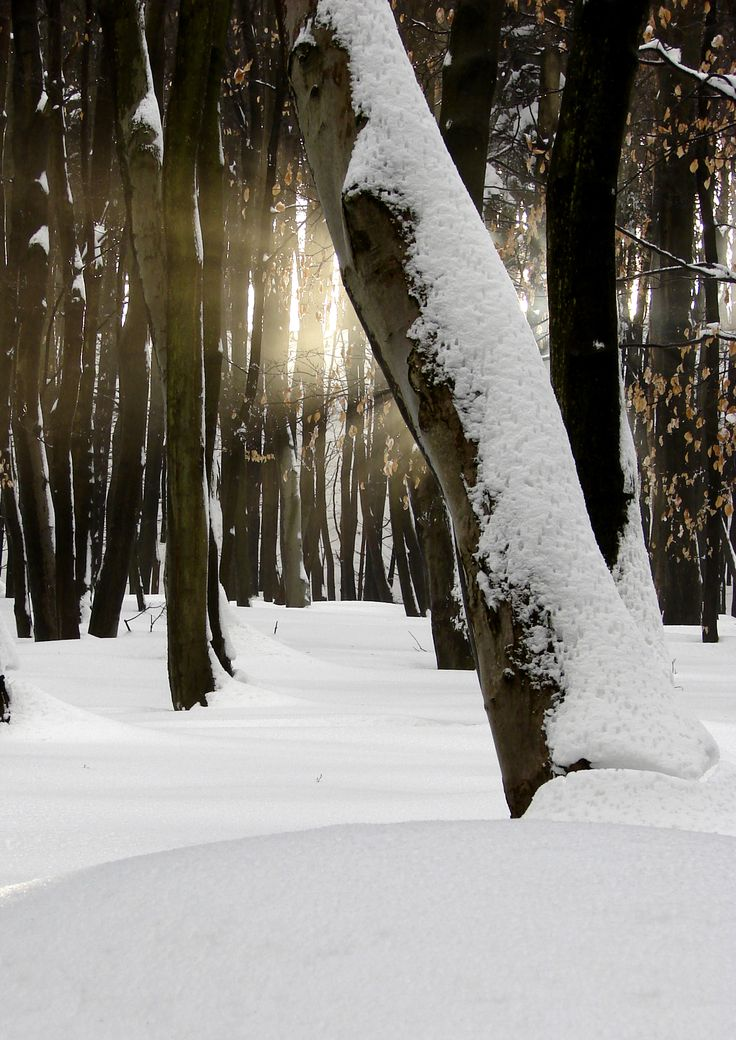 Sunshine in Kőszeg-Mountains