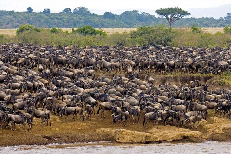 The Deadliest Animals You Can Encounter on a Safari - BookAllSafaris.com