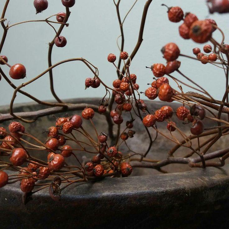 Rozenbottel takken in een oude houten vijzel