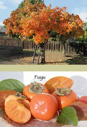 11 best images about trees i - Fruit trees every type weather area ...