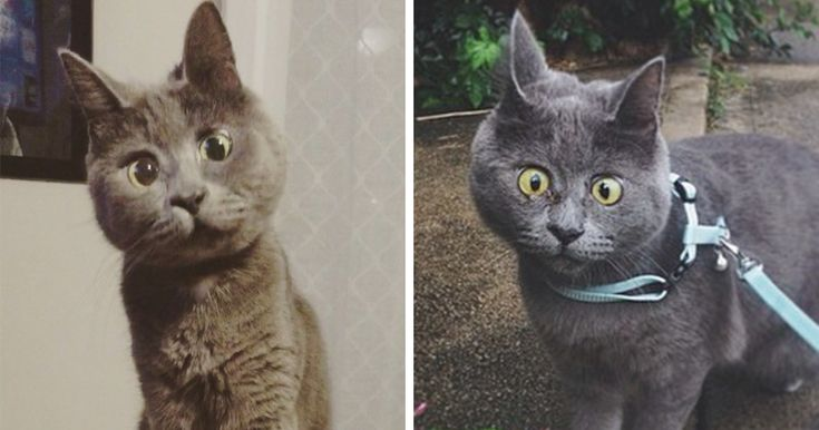 This Permanently Surprised Cat Wasn't Supposed To Survive, Now He's 4 Years Old - http://www.villagevetanimalclinic.com/this-permanently-surprised-cat-wasnt-supposed-to-survive-now-hes-4-years-old/