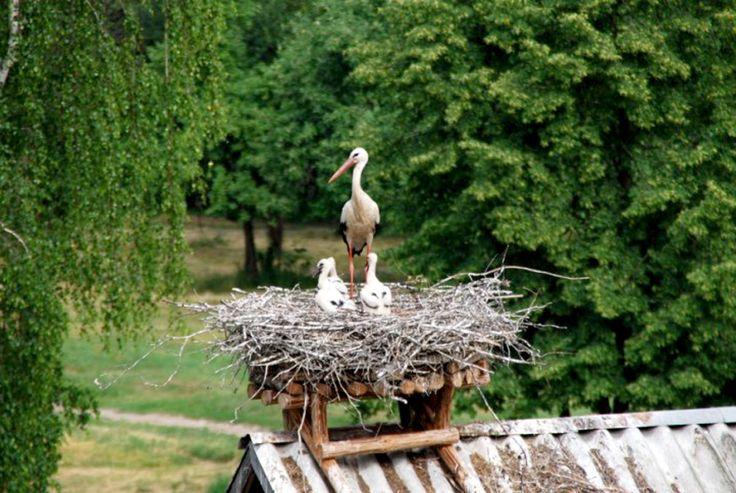 Zwiedzanie tematyczne: Szlak Bocianich Gniazd