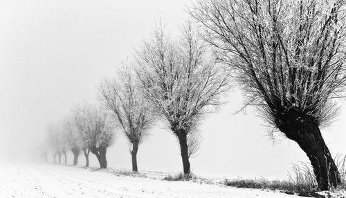 tress in Winter