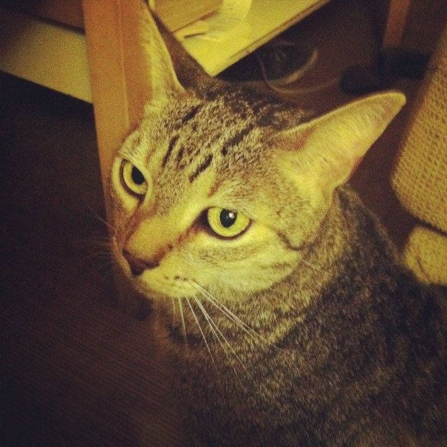Grissom #cat